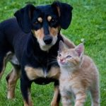 (picture of small dog and cat)